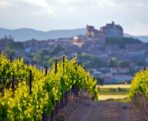 Séjour dans les vignes et vignobles de France