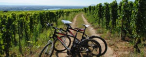 Ballade en vélos électriques dans les vignobles du beaujolais avec l'équipe IDEGO
