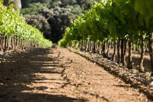Visite des vignes, caves et installations viticoles par un sommelier IDEGO