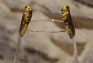 Dégustation insolite : des insectes sur vos événements professionnels à Lyon