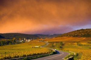 faites découvrir à vos équipes les domaines viticoles de Bourgognes avec dégustation dans les vignes
