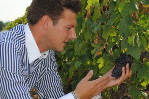 Sortie découverte des vignes avec un guide sommelier