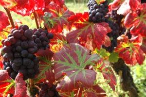 Visite de vignobles à toute période de l'année par un spécialiste