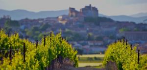 Visite des vignobles de la vallée du rhone