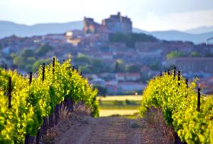 découverte des vignobles de la vallée du rhone