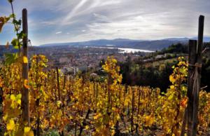 Sortie dans les vignes pour visiter les vignobles au sud de lyon, la vallée du Rhône
