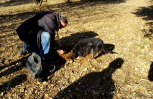 Découverte du travail d'un trufficulteur au cours d'une journée truffe organisée