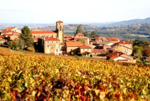 Visiter le Beaujolais, ses célèbres pierres dorées et vignerons passionnés