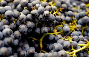 Choisissez une animation originale autour du vin et de la gastronomie pour votre team building