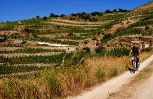 Activite sportive vélo dans les vignobles au sud de Lyon, en vallée du Rhône