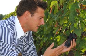Visite de vignobles par une agence spécialisée en compagnie d'un guide sommelier