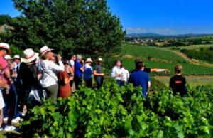 Lecture des paysages viticoles par un sommelier IDEGO