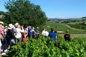 Promenade et dégustation dans les vignes avec guide sommelier