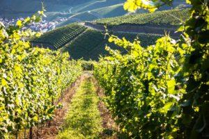 Randonnée vtt dans les vignes pour votre séminaire à Lyon