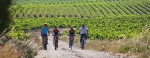 activité vélo dans les vignes pour entreprise et groupe